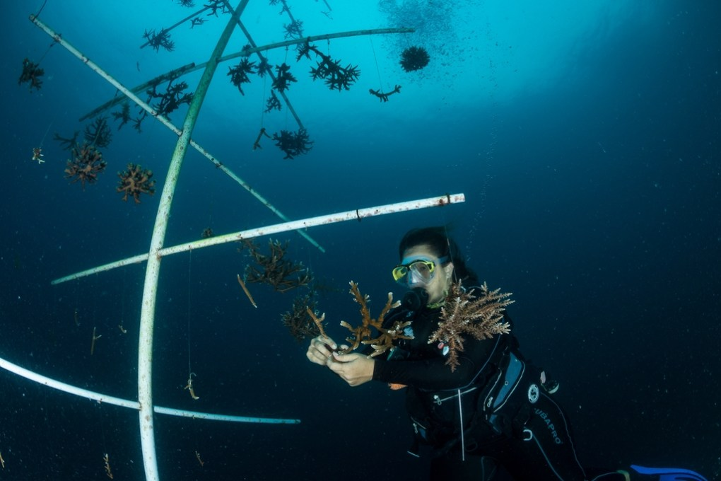 coral reef conservation - Our coral nursery