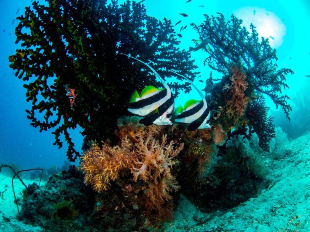 raja ampat corals