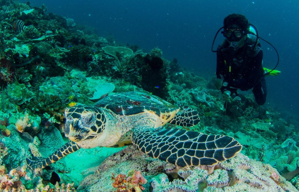 Dive master sea turtle