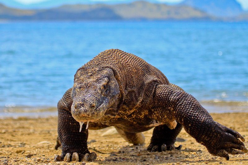 indonesische inseln raja ampat dragon
