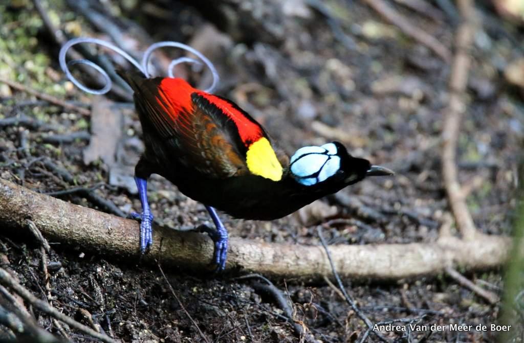 observación de aves y excursión por la selva