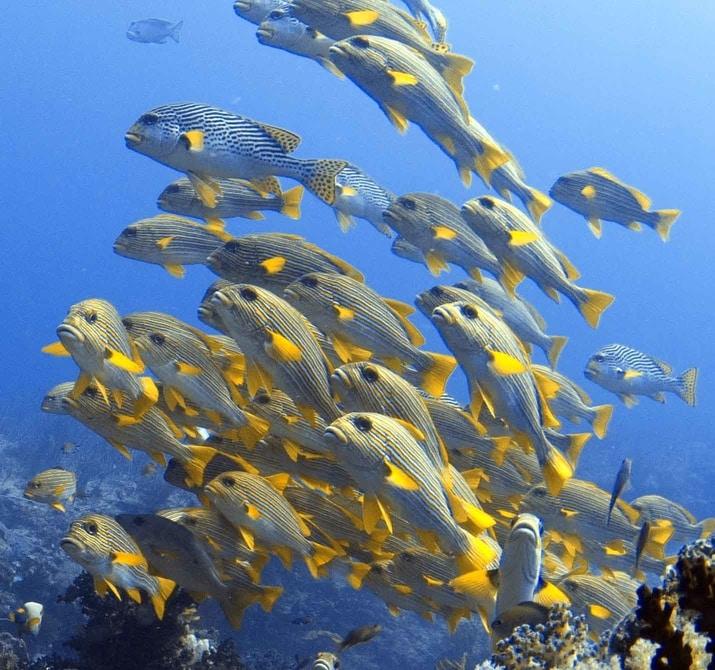 teaching kids dive fish