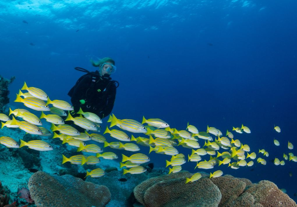 Diving and yoga retreat Raja Ampat - diving