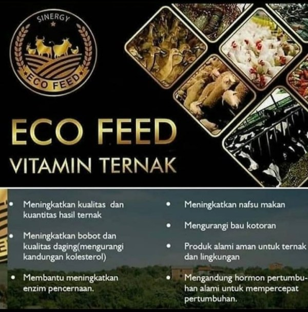 Eco Feed Vitamin Ternak