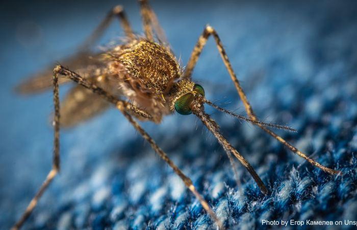 A new mosquito is threatening the malaria elimination status in Sri Lanka?