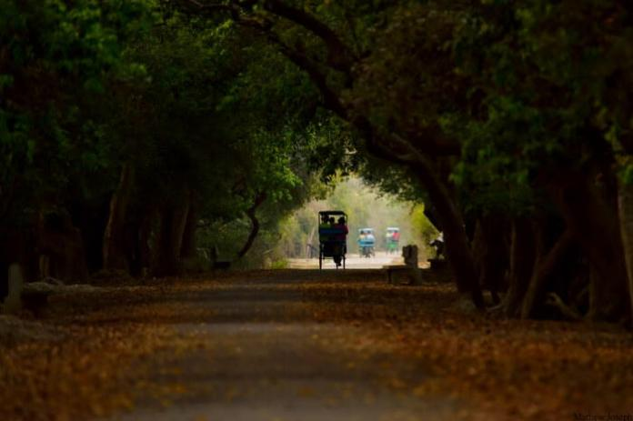Bharatpur Bird Sanctuary: Your Perfect Date With Nature