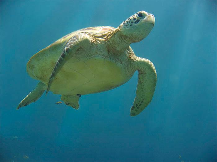sea-turtle1.jpg