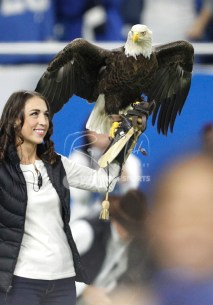 Nov 23, 2017; Detroit, MI, USA; A bald eagle lands on its handler before the game between the Detroit Lions and the Minnesota Vikings at Ford Field. Mandatory Credit: Raj Mehta-USA TODAY Sports
