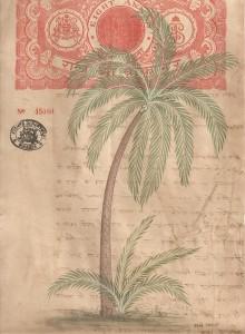 Palm Tree c006