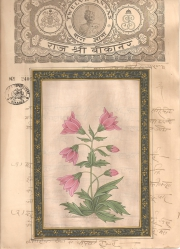 Mugal Flowers on old paper d019