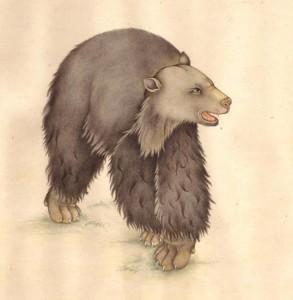 Animal i011