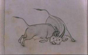 Animal i015