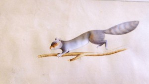 Animal i019