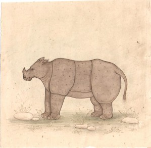 Animal i021