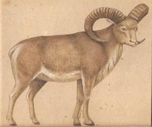 Animal i022
