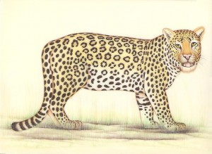 Animal i024