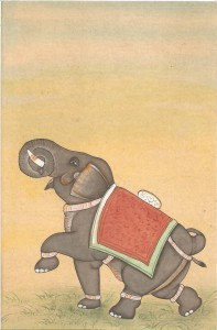 Elephant j005
