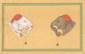 Elephant j007