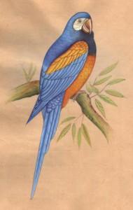 Bird k002