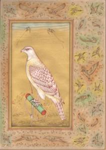 Bird k008