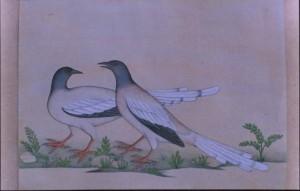 Bird k010