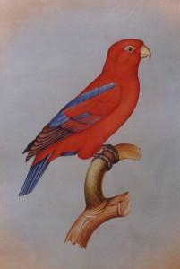 Bird k011