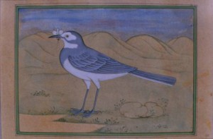 Bird k012