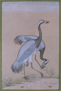 Bird k014