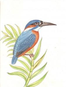 Bird k017