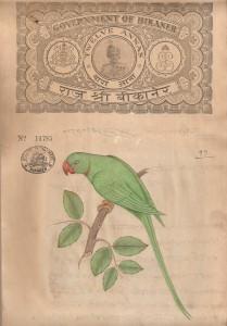 Bird k018
