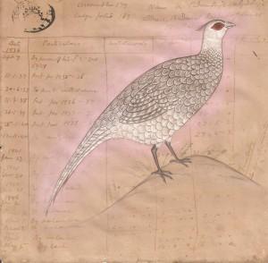 Bird k019