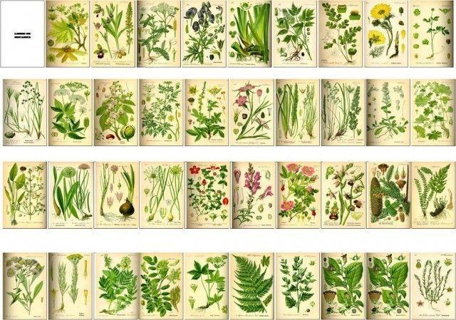 Libro de  botánica
