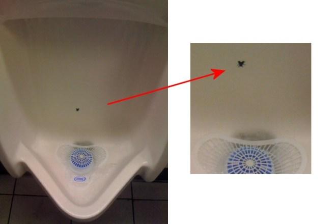 fly-urinal.jpg