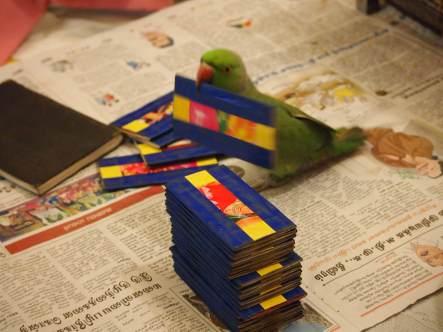 The Talented Bird