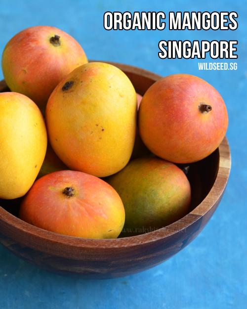 alphonso-mangoes-si-orgânicos