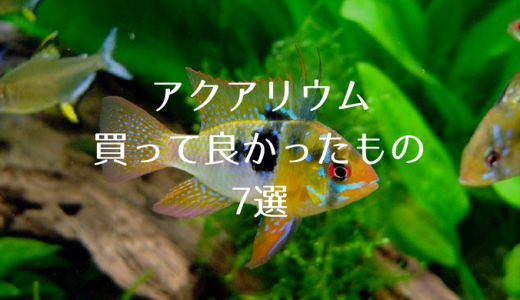 熱帯魚飼育初心者が通販で買って良かったアクアリウム用品7選