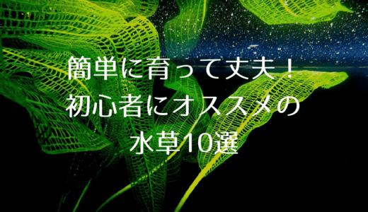 初心者向けCO2不要のオススメ水草10選 丈夫で簡単に育つ種類教えます