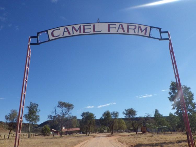 camelfarm