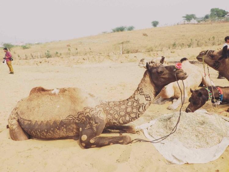 camel gobinda