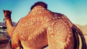 camel art