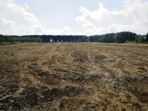 刈り取り後の圃場。この後麦を播種の予定。