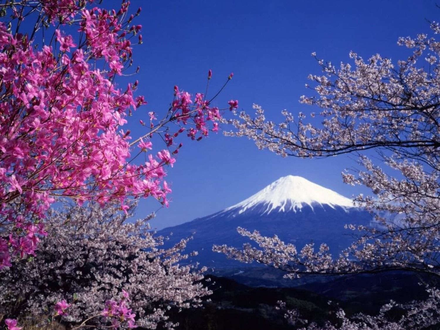 Ninja, manga and cherry blossoms: Voyagin connects international travelers with Japanese cultural experiences online