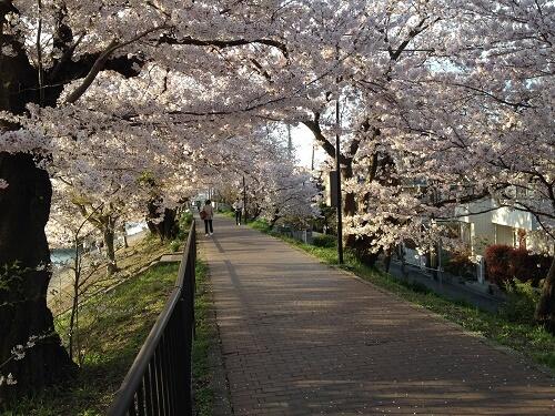 桜堤公園1