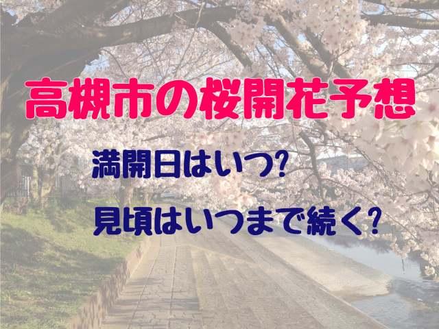 高槻市、桜の開花予想。ずばり満開日はいつ?