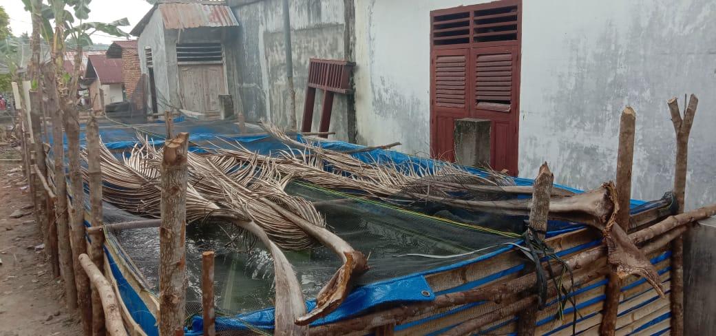 Budidaya ikan lele menggunakan kolam terpal yang lagi tren di Paluta. Foto: Rakyatsumut.com/ Rifai Dalimunthe