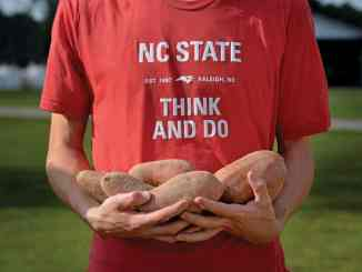 CALS student holding sweet potatoes.