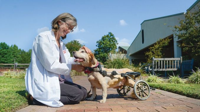 Pets receive treatment at NC State's Veterinary hospital