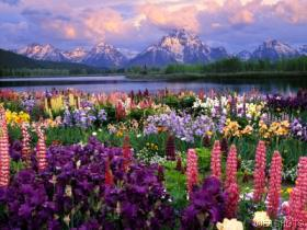 grand_tetons_and_wildflowers.jpg