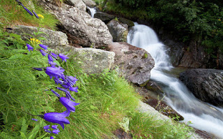 Waterfalls and bluebells- Mircea Costina