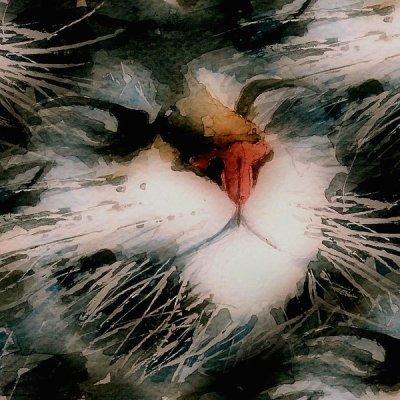 Metoda pufoasa a unui fan branza de a scapa de balbaiala